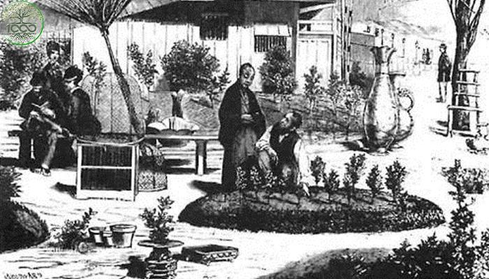 บอนไซญี่ปุ่น การปลูกไม้ประดับในกระถางที่มีชื่อเสียงที่สุด